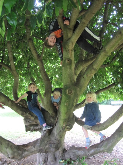 Monkies in the tree